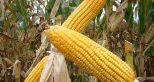 m_emater-mg-inicia-inscricao-de-agricultores-familiares-para-o-garantia-safra